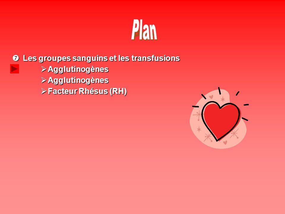 Plan Les groupes sanguins et les transfusions Agglutinogènes