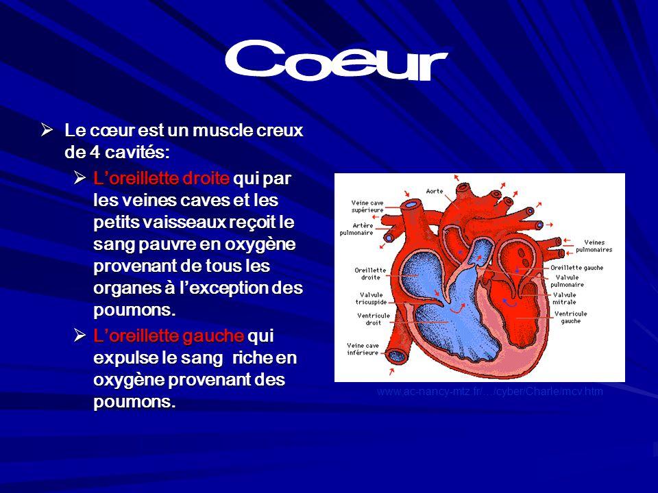 Coeur Le cœur est un muscle creux de 4 cavités: