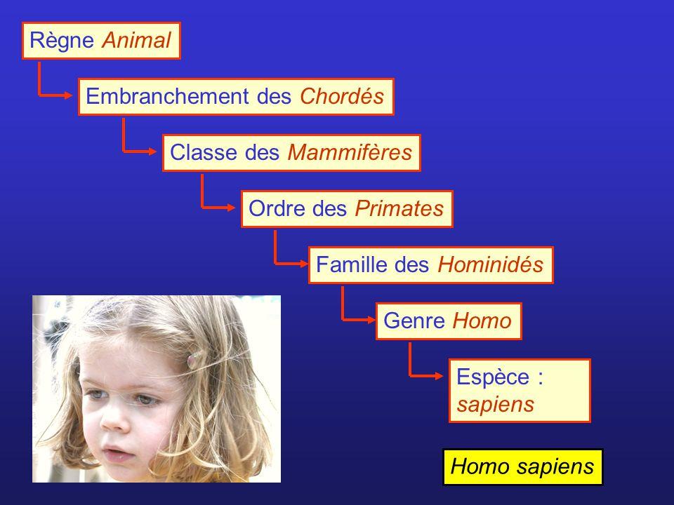 Règne Animal Embranchement des Chordés. Classe des Mammifères. Ordre des Primates. Famille des Hominidés.