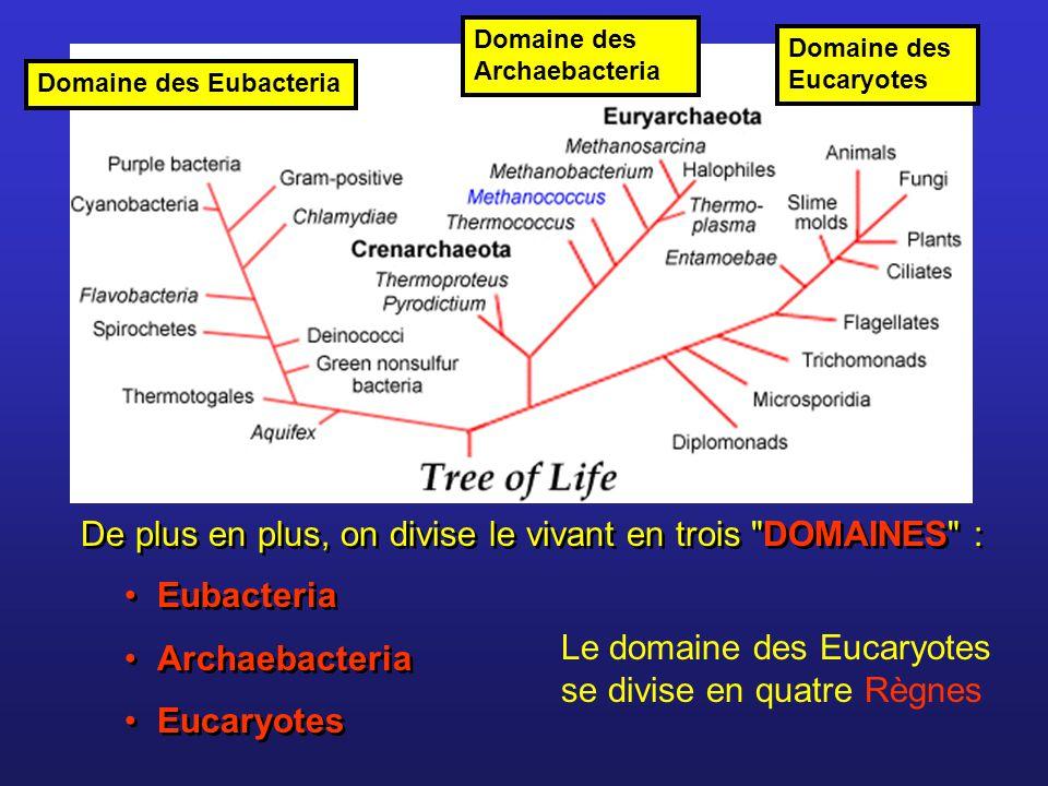 De plus en plus, on divise le vivant en trois DOMAINES :