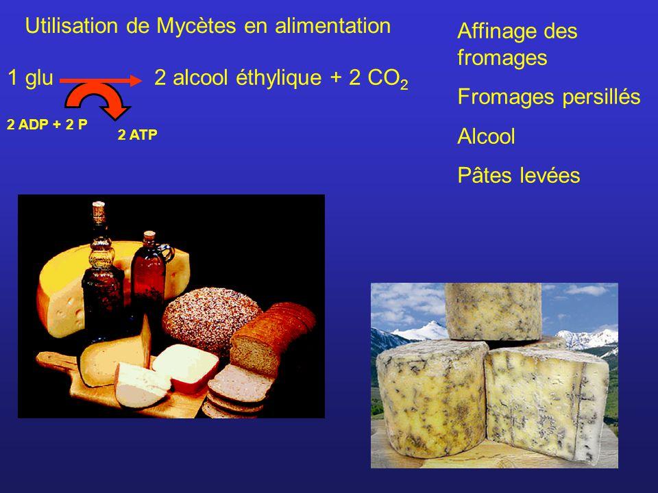 Utilisation de Mycètes en alimentation Affinage des fromages