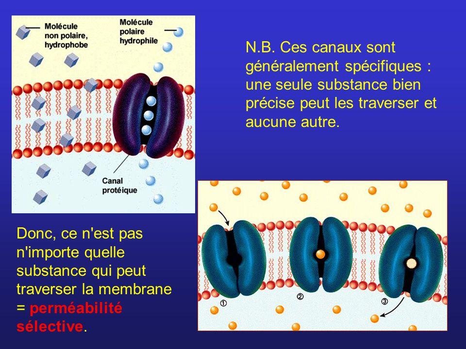 N.B. Ces canaux sont généralement spécifiques : une seule substance bien précise peut les traverser et aucune autre.