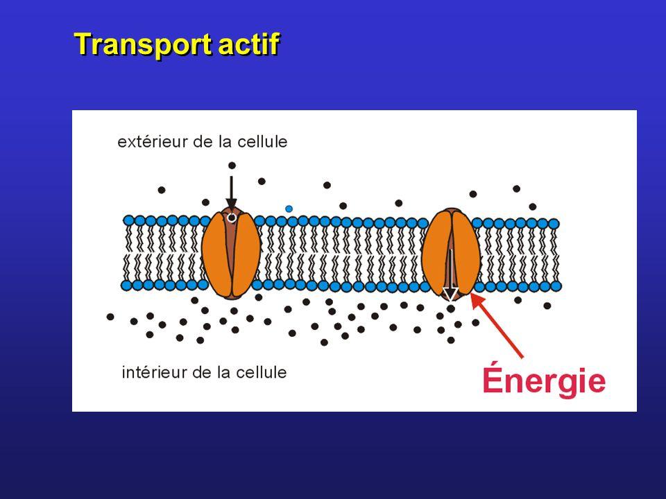 Transport actif