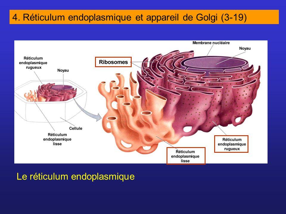 4. Réticulum endoplasmique et appareil de Golgi (3-19)