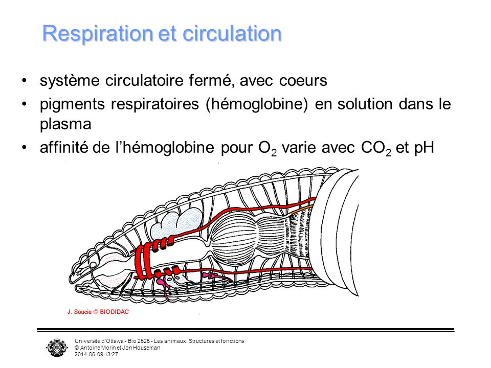 Respiration et circulation