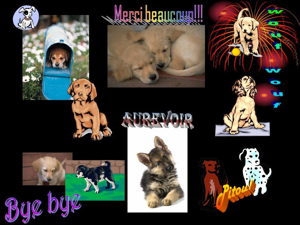 Merci beaucoup!!! wouf wouf Aurevoir Pitou! Bye bye