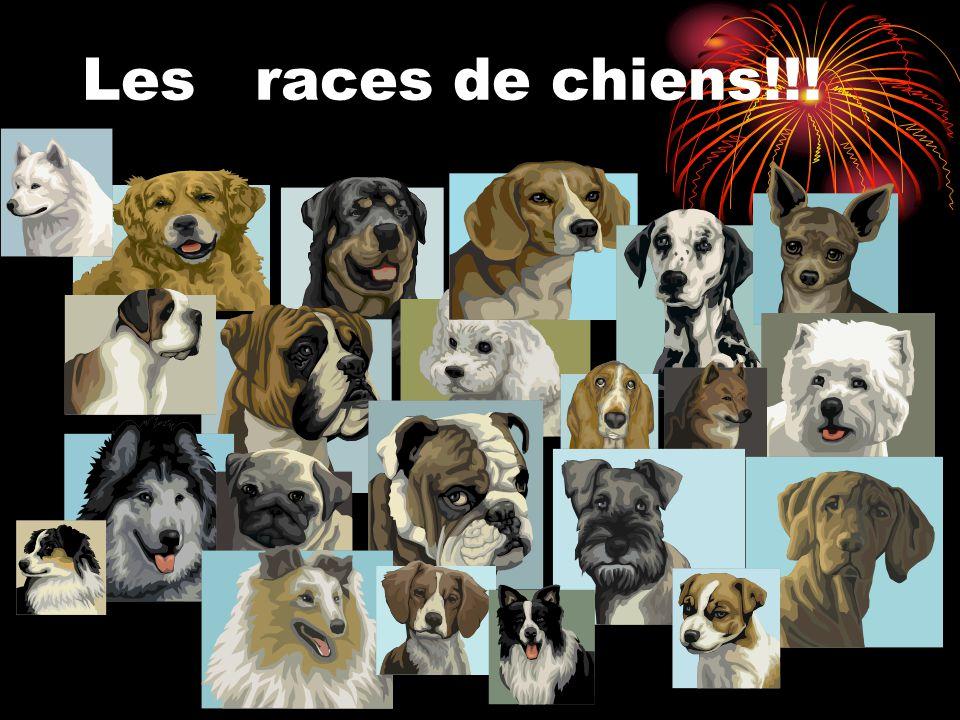 Les races de chiens!!!
