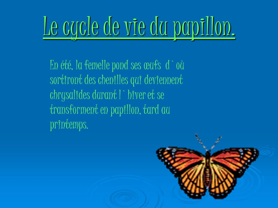 Le cycle de vie du papillon.