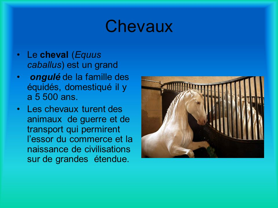 Chevaux Le cheval (Equus caballus) est un grand
