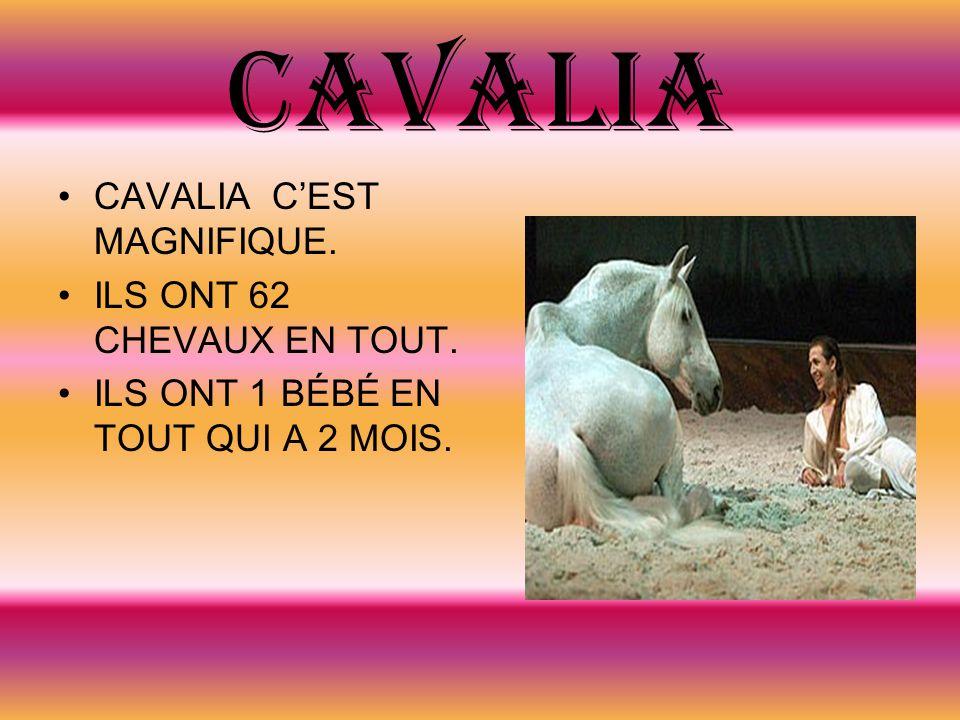 CAVALIA CAVALIA C'EST MAGNIFIQUE. ILS ONT 62 CHEVAUX EN TOUT.