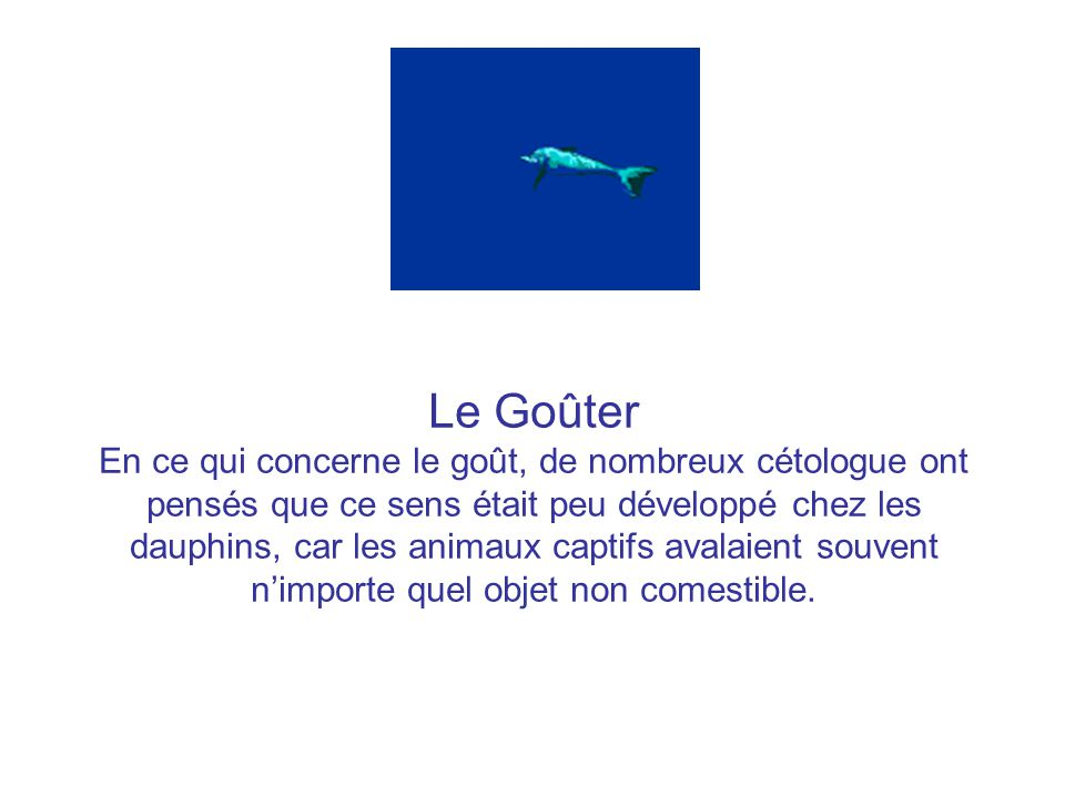 Le Goûter En ce qui concerne le goût, de nombreux cétologue ont pensés que ce sens était peu développé chez les dauphins, car les animaux captifs avalaient souvent n'importe quel objet non comestible.