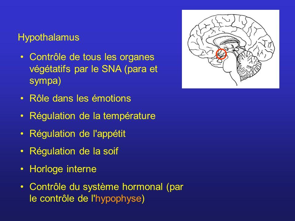 Hypothalamus Contrôle de tous les organes végétatifs par le SNA (para et sympa) Rôle dans les émotions.