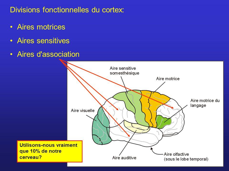 Divisions fonctionnelles du cortex: