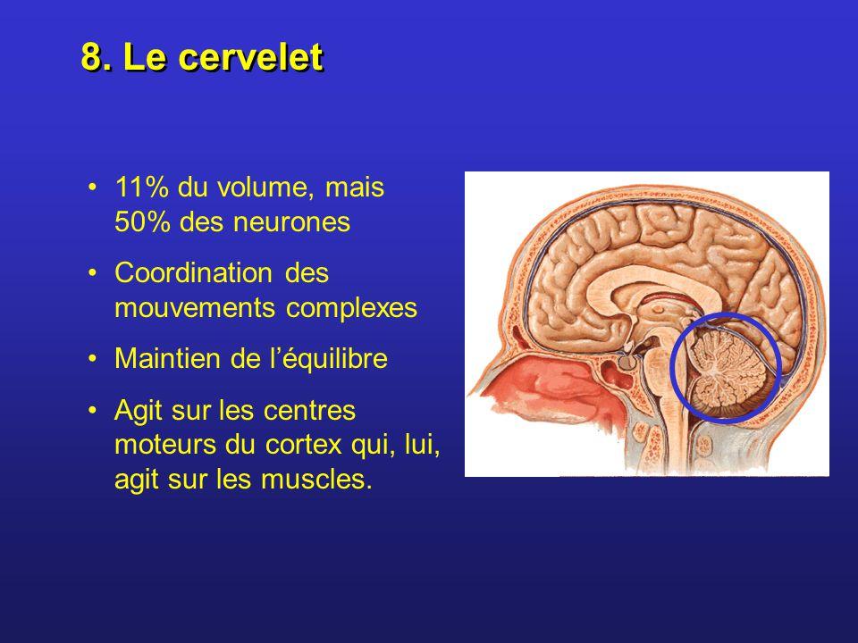 8. Le cervelet 11% du volume, mais 50% des neurones
