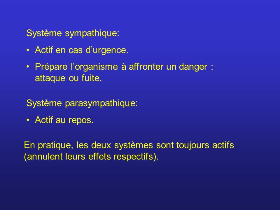 Système sympathique: Actif en cas d'urgence. Prépare l'organisme à affronter un danger : attaque ou fuite.