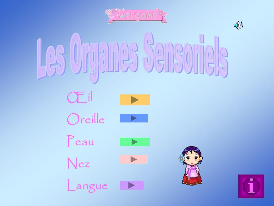 Les Organes Sensoriels
