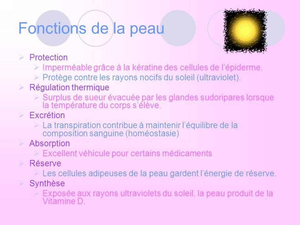 Fonctions de la peau Protection
