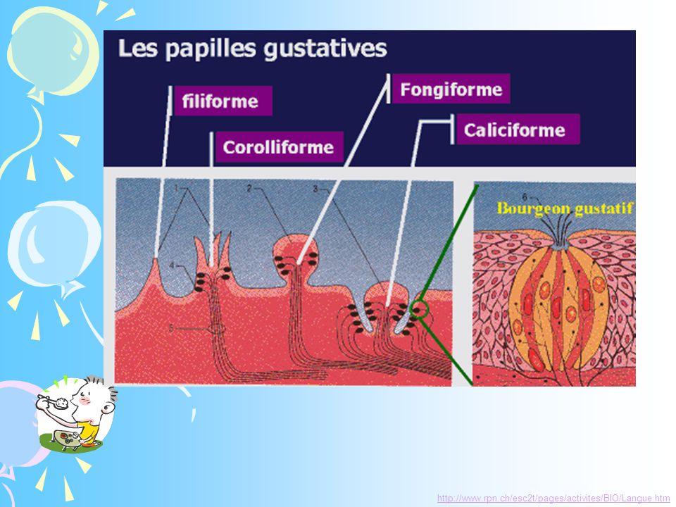 http://www.rpn.ch/esc2t/pages/activites/BIO/Langue.htm