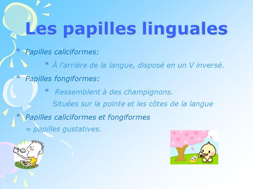 Les papilles linguales