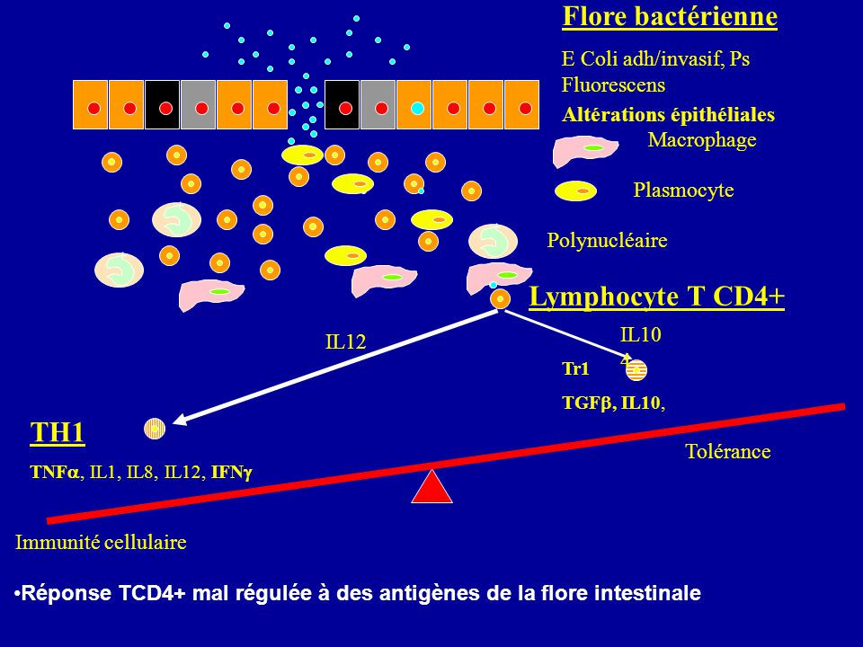 Flore bactérienne Lymphocyte T CD4+ TH1