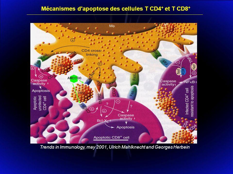 Mécanismes d apoptose des cellules T CD4+ et T CD8+