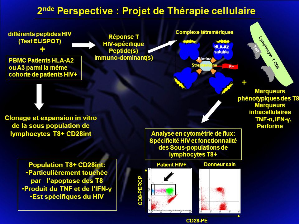 2nde Perspective : Projet de Thérapie cellulaire