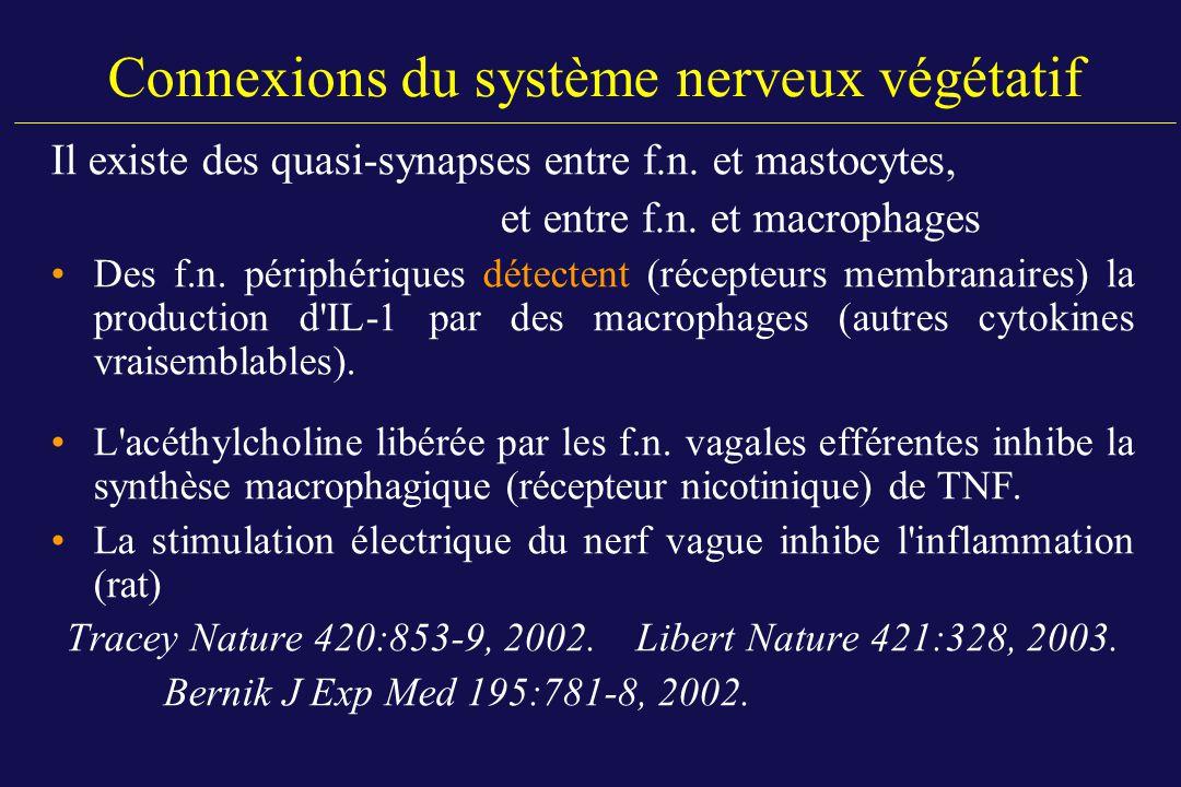 Connexions du système nerveux végétatif