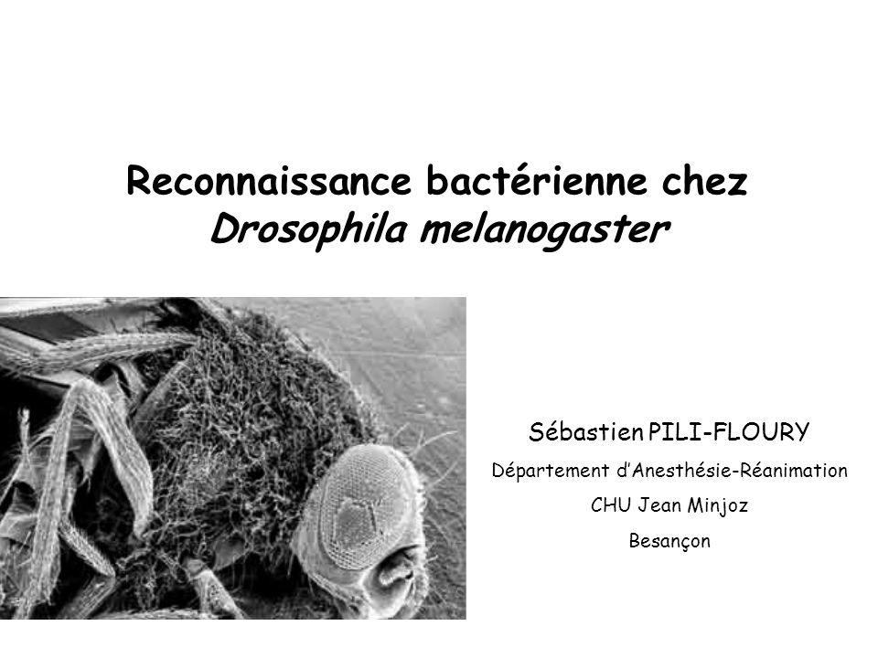 Reconnaissance bactérienne chez Drosophila melanogaster