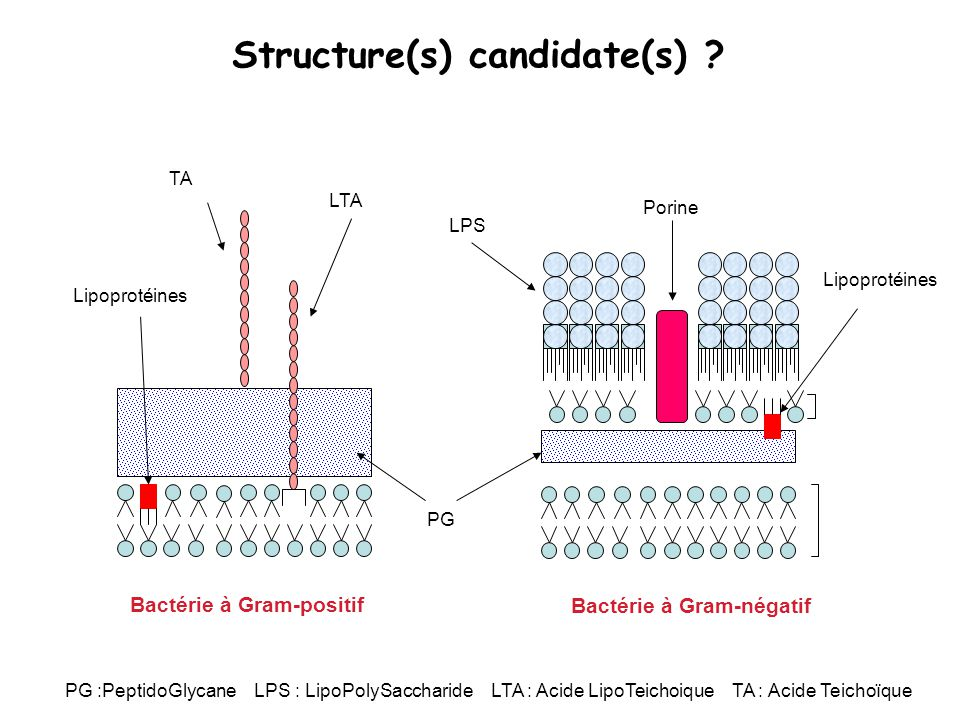 Structure(s) candidate(s)