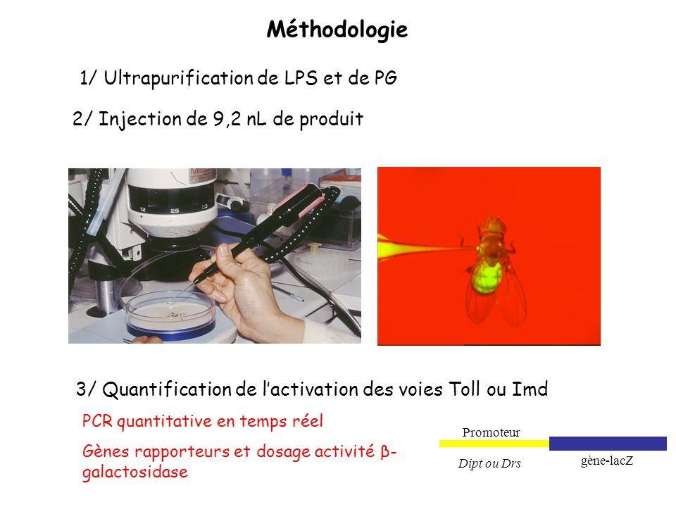 Méthodologie 1/ Ultrapurification de LPS et de PG