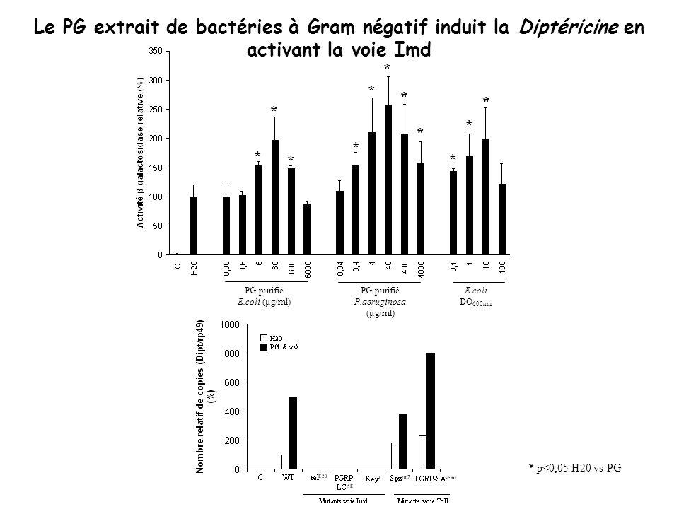 Le PG extrait de bactéries à Gram négatif induit la Diptéricine en activant la voie Imd