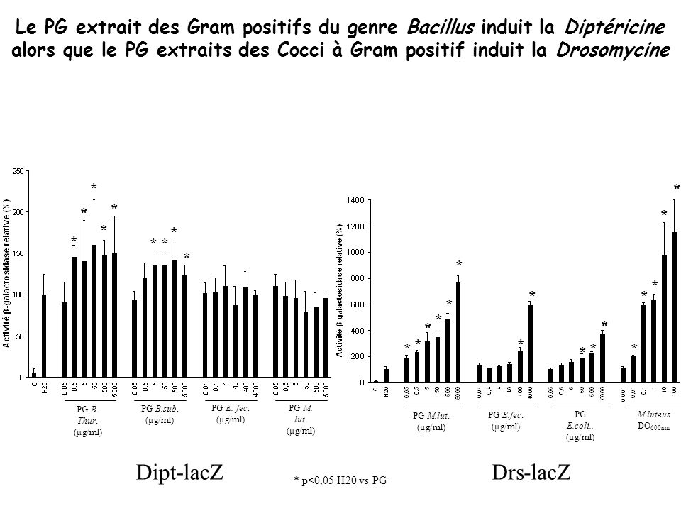 Le PG extrait des Gram positifs du genre Bacillus induit la Diptéricine alors que le PG extraits des Cocci à Gram positif induit la Drosomycine