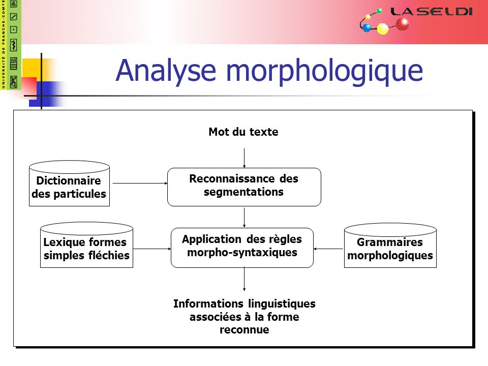 Analyse morphologique