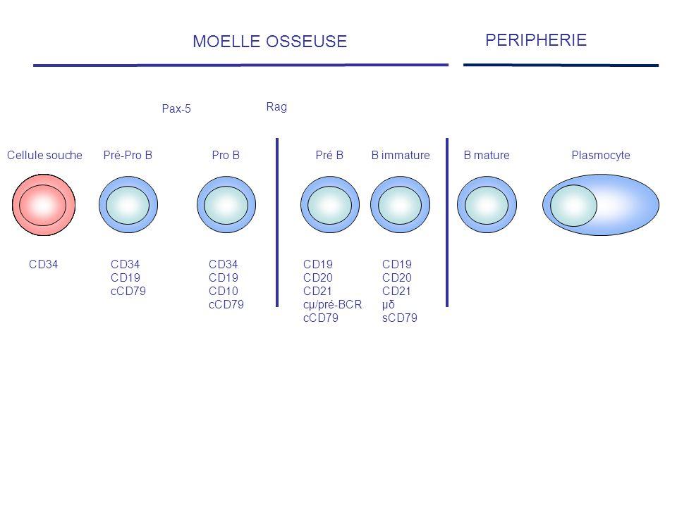MOELLE OSSEUSE PERIPHERIE Cellule souche Pré-Pro B Pro B Pré B