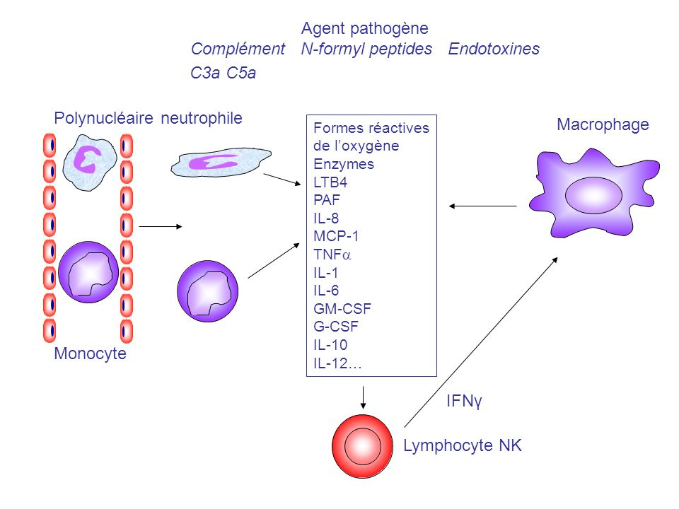 Complément N-formyl peptides Endotoxines