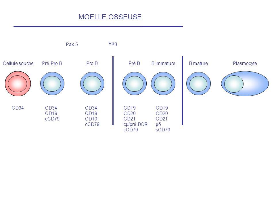MOELLE OSSEUSE Pax-5 Rag Cellule souche Pré-Pro B Pro B Pré B