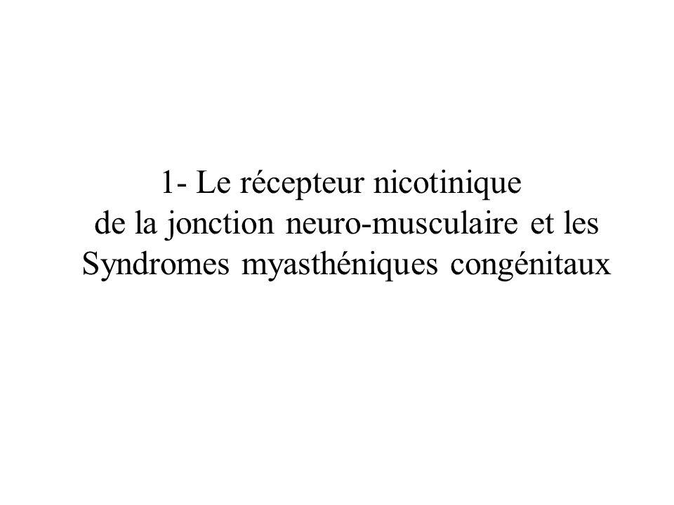 1- Le récepteur nicotinique de la jonction neuro-musculaire et les