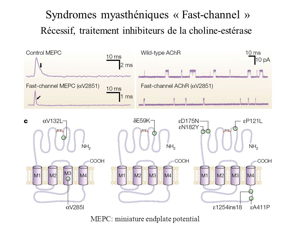 Syndromes myasthéniques « Fast-channel »