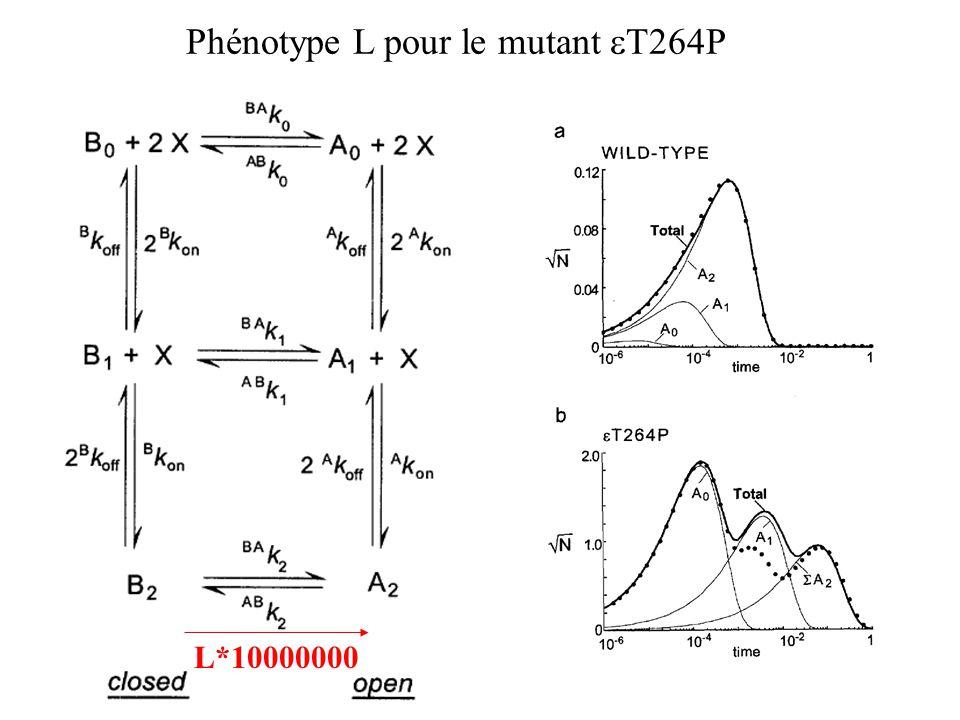 Phénotype L pour le mutant eT264P