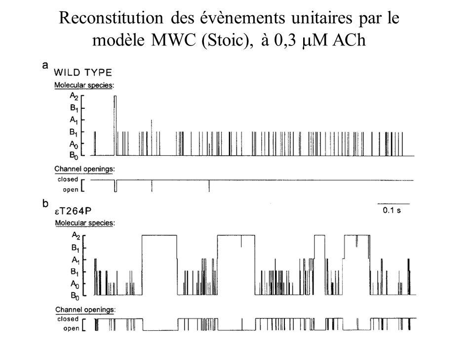 Reconstitution des évènements unitaires par le modèle MWC (Stoic), à 0,3 mM ACh