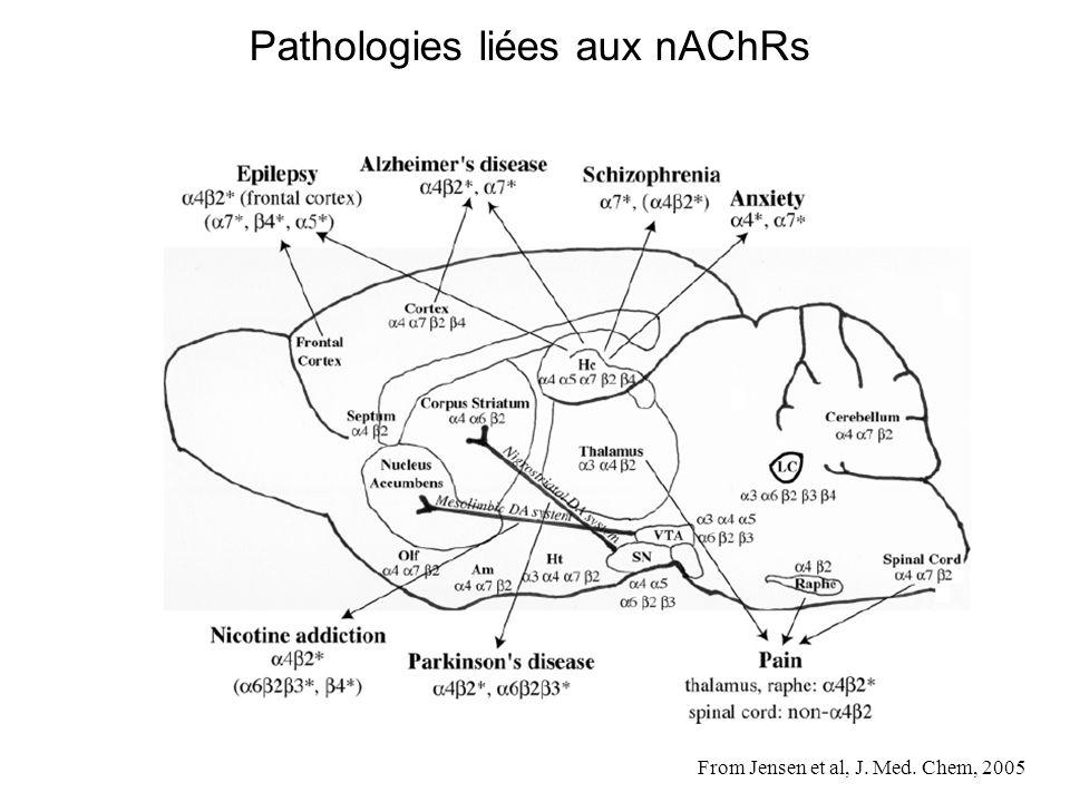 Pathologies liées aux nAChRs
