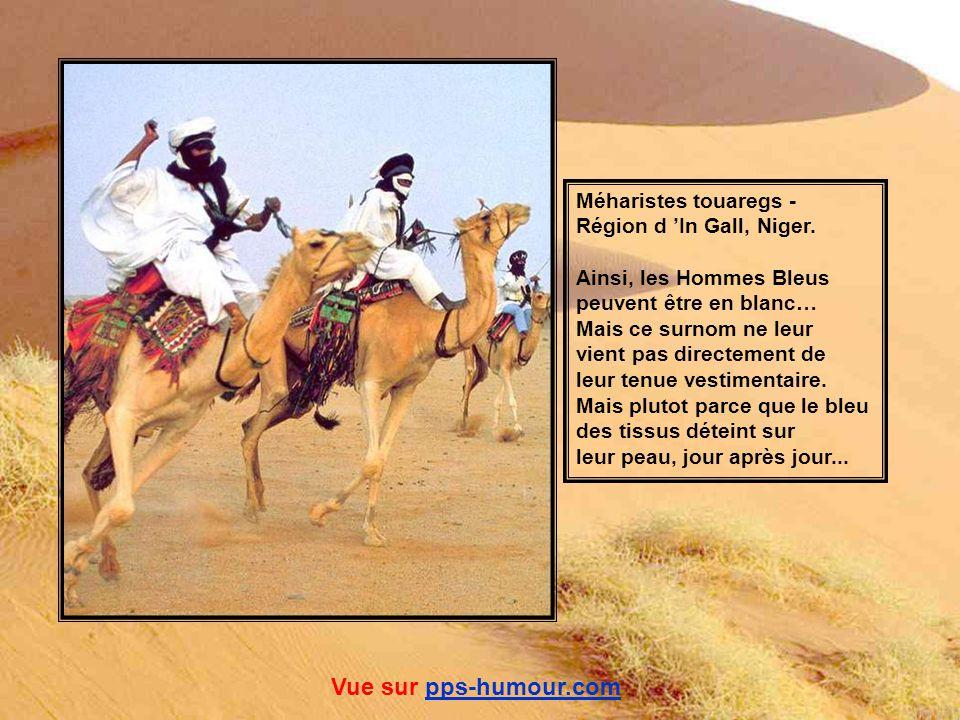 Vue sur pps-humour.com Méharistes touaregs - Région d 'In Gall, Niger.