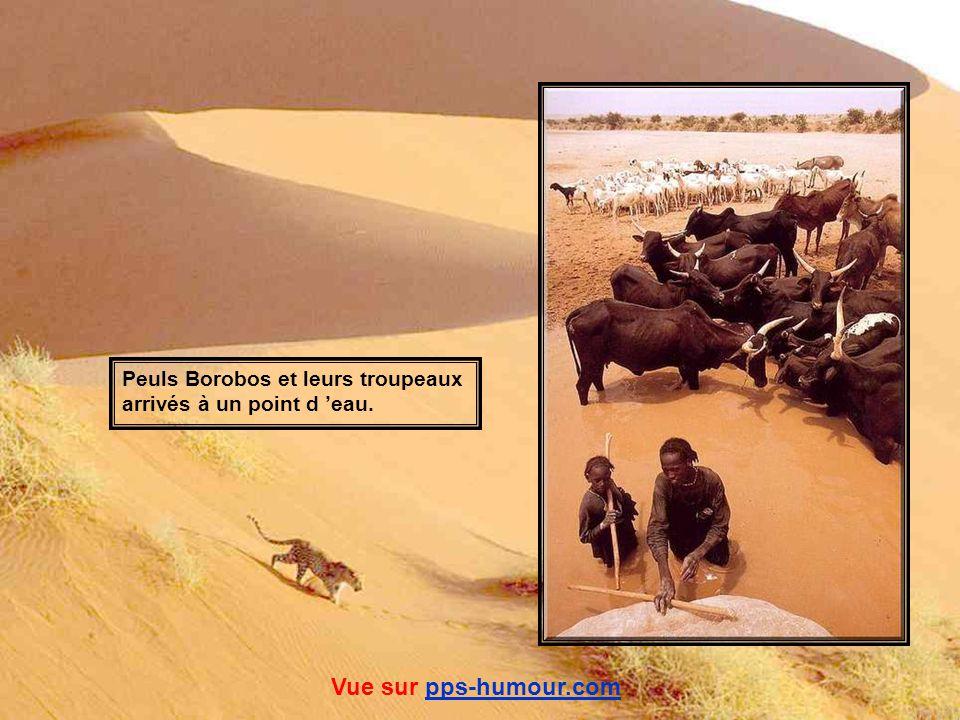 Vue sur pps-humour.com Peuls Borobos et leurs troupeaux