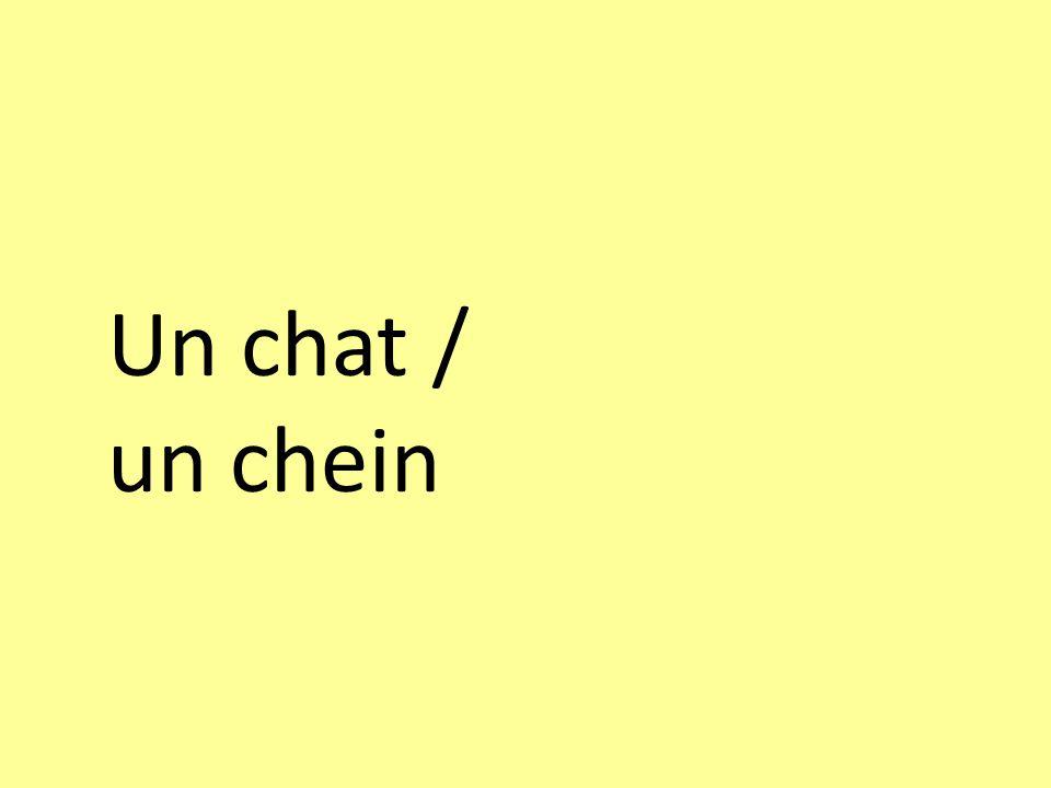 Un chat / un chein