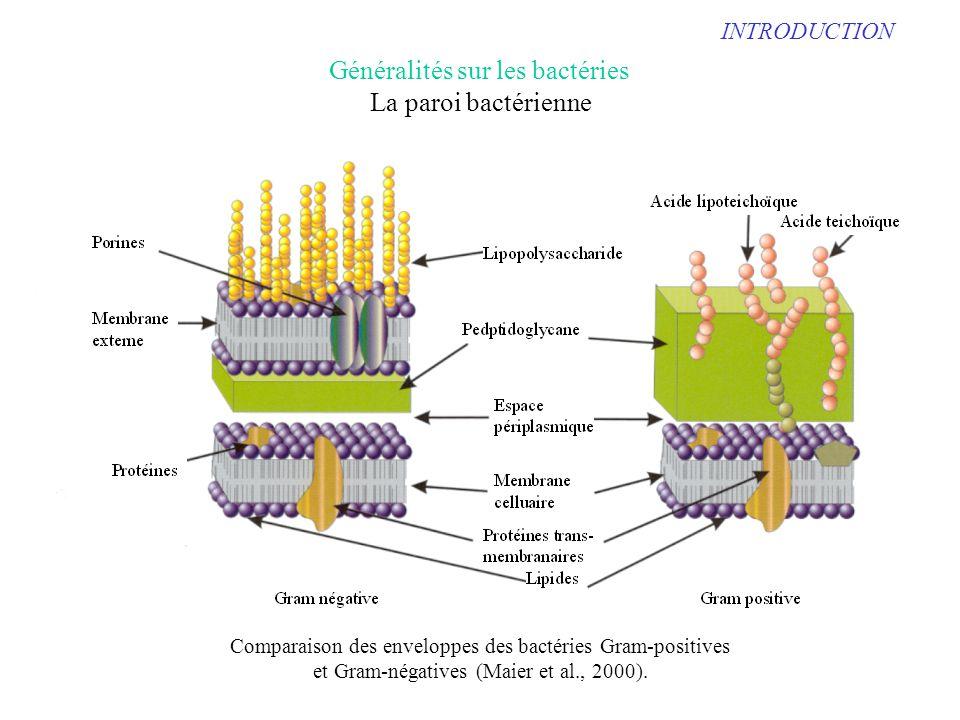 Généralités sur les bactéries La paroi bactérienne