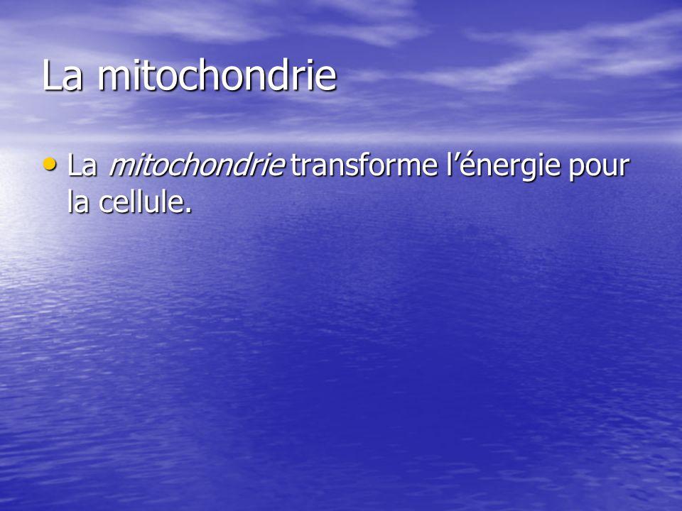 La mitochondrie La mitochondrie transforme l'énergie pour la cellule.