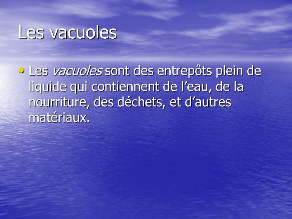 Les vacuoles Les vacuoles sont des entrepôts plein de liquide qui contiennent de l'eau, de la nourriture, des déchets, et d'autres matériaux.
