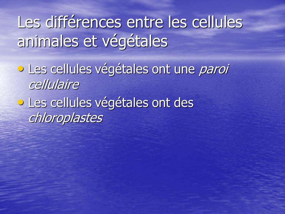 Les différences entre les cellules animales et végétales