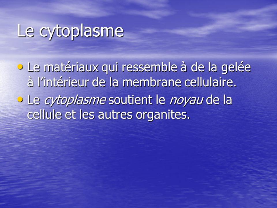 Le cytoplasme Le matériaux qui ressemble à de la gelée à l'intérieur de la membrane cellulaire.