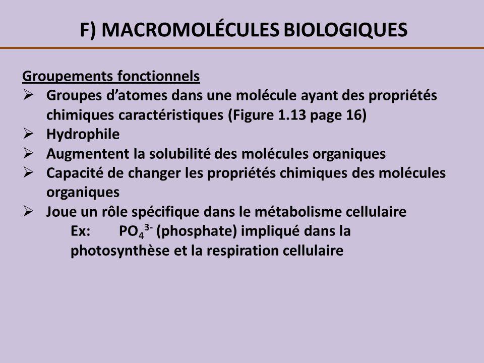 F) MACROMOLÉCULES BIOLOGIQUES